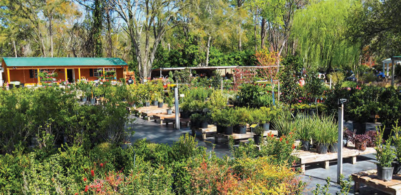 Low country and Hilton Head Dream Gardens