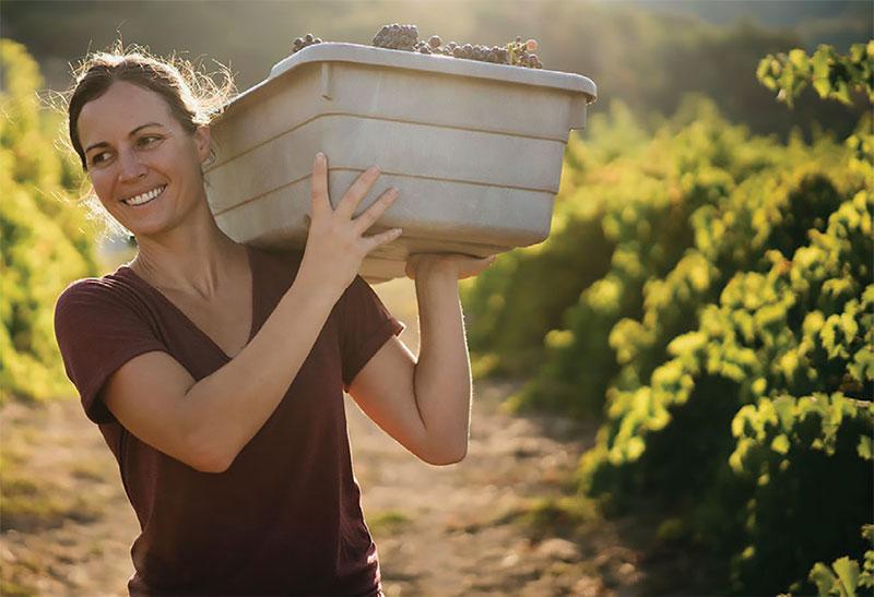 winemaking3