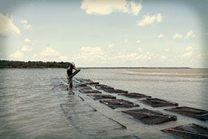Hudson's GM opens new oyster farm