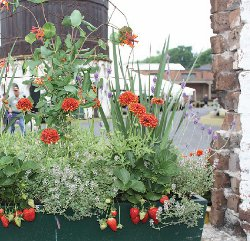 Grow your own edible container garden