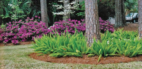 Your Lowcountry garden's March to-do list