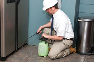the sure-fire way to keep palmetto bugs at bay is to hire an exterminator to spray around the perimeter of your home