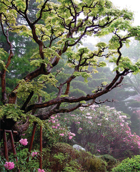 Idyllic Retreats - Chinese and Japanese Gardens