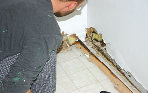 When mold and mildew strike