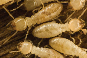 Stop termites in their tracks