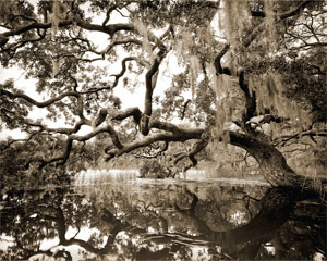 Using a wooden view camera, the photographic art of Ben Ham offers a unique view of the Lowcountry from someone who has been exploring the creeks, marshes and backroads of the South Carolina coast for over 30 years. Images by Ben Ham, (843) 842-4163.